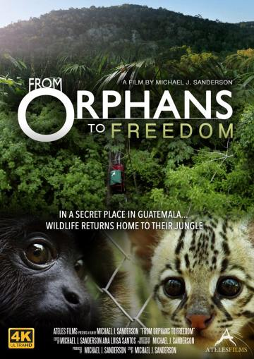 From Orphans to Freedom