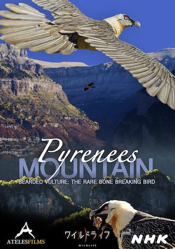 Pyrenees Mountain: Lammergeier