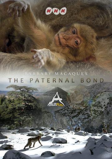 The Paternal Bond